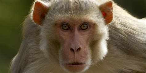 Honda Monkey Hd Photo by Monkey Wallpapers Images Photos Pictures Backgrounds