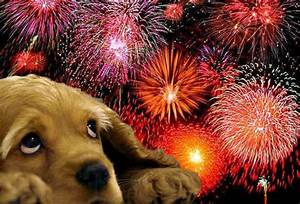 Pets and fireworks: keeping your pet safe during fireworks ...
