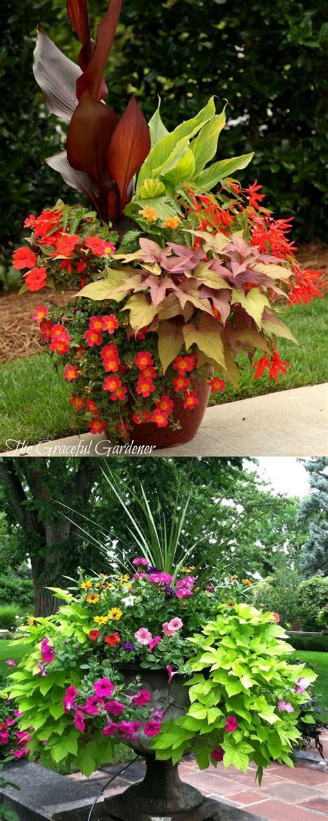 container garden ideas sun great flower garden ideas in front of house on with small