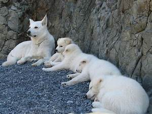 Beautiful, Wolves and Arctic wolf on Pinterest