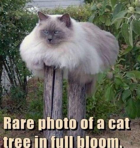 cat memes cats masters internet pets freeaddon