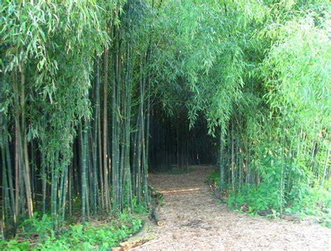 bamboo garden nj flowers in garden state new jersey