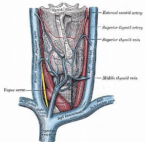 Innominate Artery Diagram
