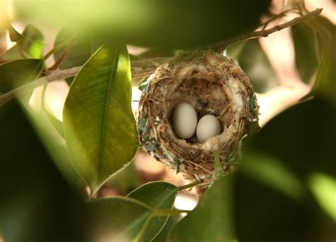 really impressive facts about the nests and eggs of