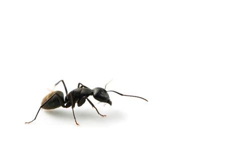 formiche  casa  toglierle  rimedi naturali