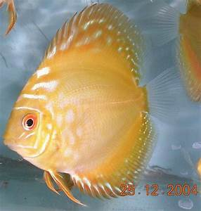 252 best images about MK Fish, Bettas, Invertebrates, and ...