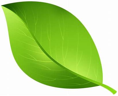 Leaf Transparent Leaves Clip Clipart Spring Yopriceville