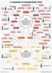 Taxonomy Of Common Beer Types   Craftbeer