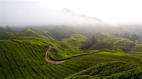 wallpaper cameron highlands   wallpaper malaysia