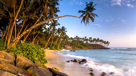 mirissa beach south coast southern province sri lanka palm