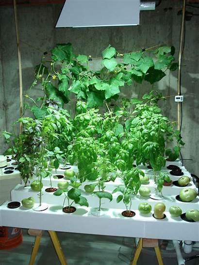 Indoor Hydroponic Garden Grow Gardening Hydroponics Plant