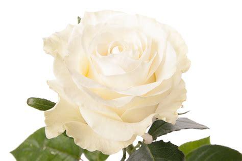 Wedding Decorations Catalogs Free 25 free wedding flowers catalogs tropicaltanning info