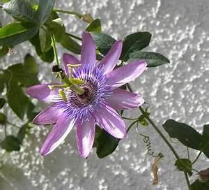 Comment fleurir un mur ensoleillé au sud dans le jardin