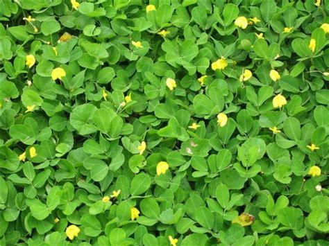 TONKLAGROUP: การปลูกพืชคลุมดินเป็นไม้ดอกไม้ประดับ
