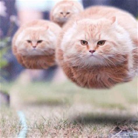 Funny Photoshopped Animals Pics