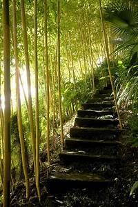 Bambou A Planter : comment planter des bambous dans son jardin bambou ~ Premium-room.com Idées de Décoration