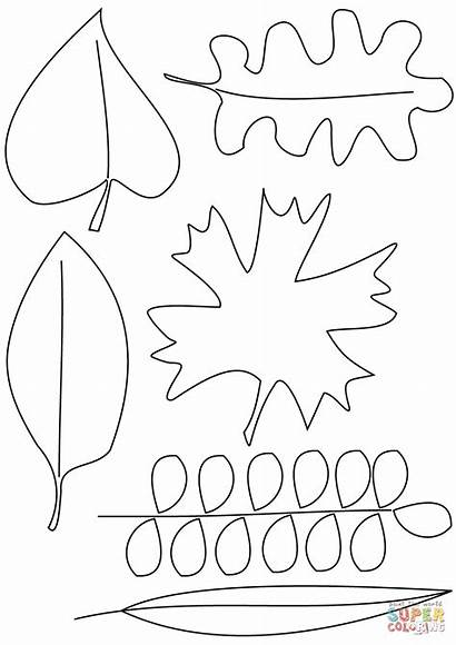 Coloring Leaves Pages Autumn Printable Paper Drawing