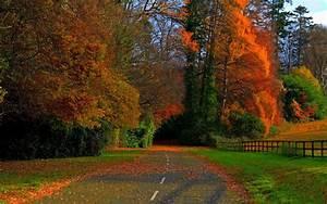 Nature, Road, Fall, Wallpapers, Hd, Desktop, And, Mobile