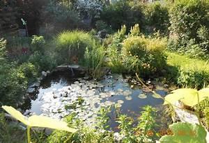 Glühweinparty Im Garten : teich anlegen tipps zu planung bepflanzung und mehr ~ Whattoseeinmadrid.com Haus und Dekorationen