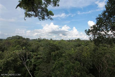 amazon canap amazon rainforest canopy