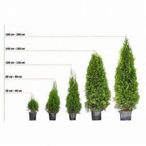 Thuja Smaragd Pflanzabstand : lebensbaum smaragd h he ca 100 120 cm ballenware ~ Michelbontemps.com Haus und Dekorationen