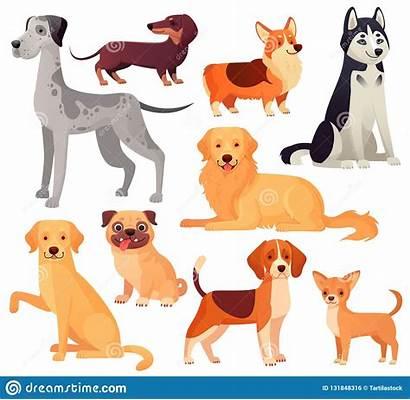 Labrador Illustrations Retriever Golden Cartoon Dog Vector