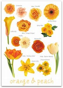 Orange And Peach Flower Guide Pictures  Photos  And Images