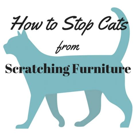 Stop Cat From Scratching Furniture by How To Stop Cats From Scratching Furniture Pethelpful