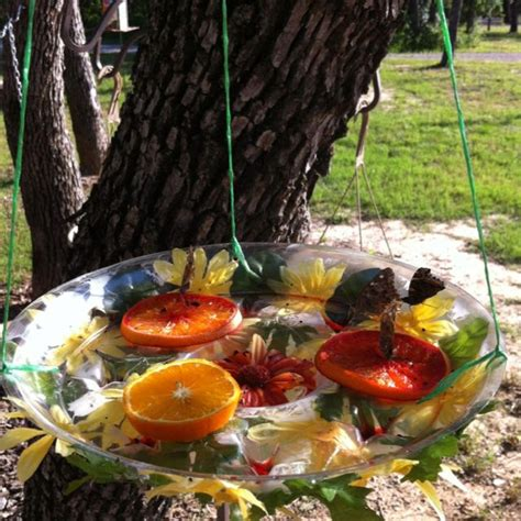 butterfly feeder diy our butterfly feeder gardening