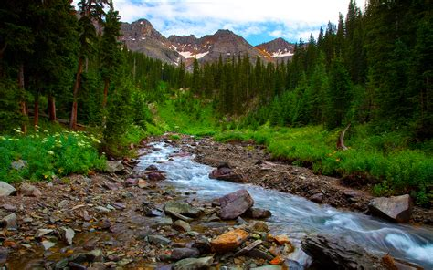 Spring Landscape River Mountain Flowers Pine Forest Hd