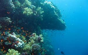 under water pics of the ocean