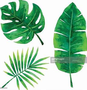 Watercolor Tropical Leaves Vector Art | Getty Images