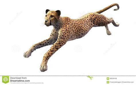 Wild Animals Running