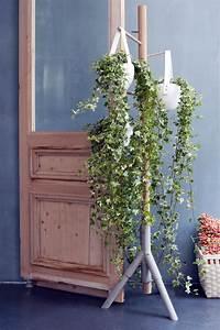 Efeu Als Zimmerpflanze : april 2015 der efeu ist die zimmerpflanze der monats ~ Indierocktalk.com Haus und Dekorationen