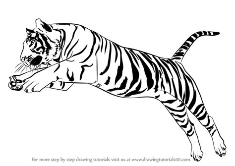 draw  tiger jumping video drawingtutorialscom