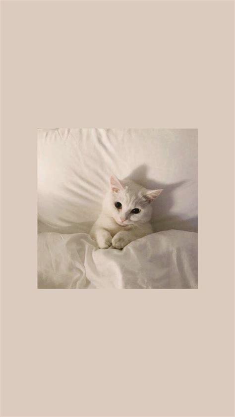 qt cat pink aesthetic wallpaper iphone cat in 2020