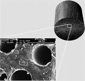 Carbon Monolith Optical Photograph And The Micrograph Of