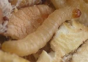 Larve Mite Alimentaire : consommation conseils senor informations ~ Nature-et-papiers.com Idées de Décoration