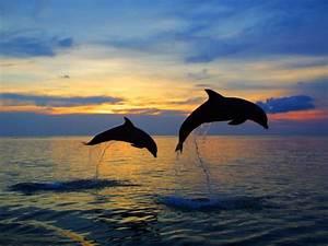 Schöne Delfin Bilder : 1001 ideen zum thema sch ne delfine bilder photography nature light color tiere ~ Frokenaadalensverden.com Haus und Dekorationen