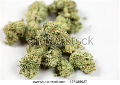 bud stock images royalty  images vectors shutterstock