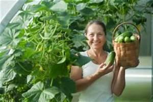 Bohnen Anbauen Anleitung : salatgurken anbauen so gelingt 39 s drinnen oder drau en ~ Whattoseeinmadrid.com Haus und Dekorationen
