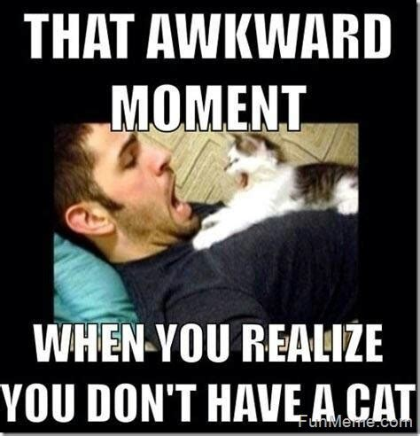 Cat Interesting Meme - funny cat pics some funny cat memes the kittyton post