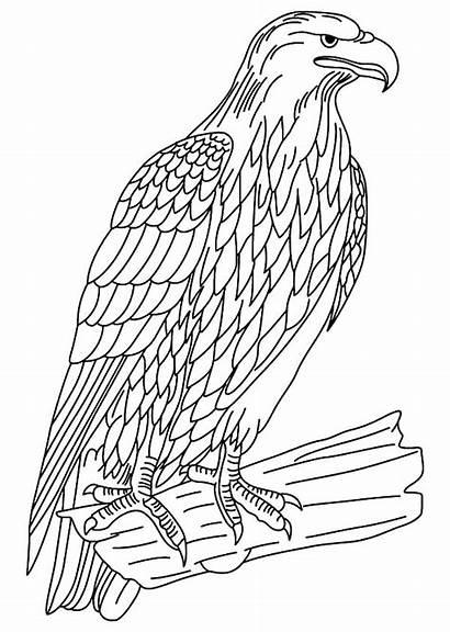 Bird Falcon Coloring Pages Wildlife Netart