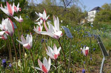 Botanischer Garten Leipzig Veranstaltungen by Quermania Botanischer Garten Der Universit 228 T Leipzig