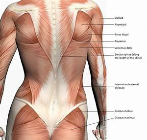 What U0026 39 S Causing Your Back Pain