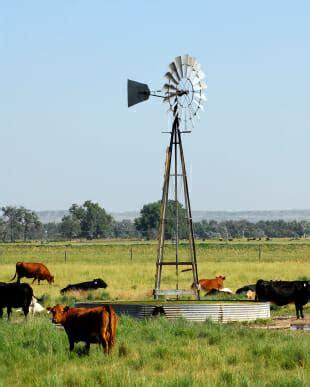 animal power generation   grid news