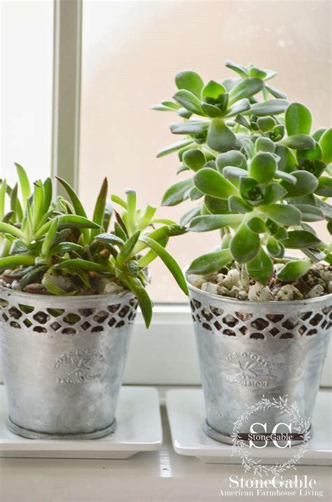 succulents care plant succulent indoor inside pots window trendy bottom holes stonegableblog