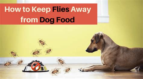 How To Keep Flies Away From Dog Food  Top Solution