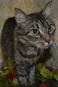 Alana the Pretty Maine Coon Mix's Web Page