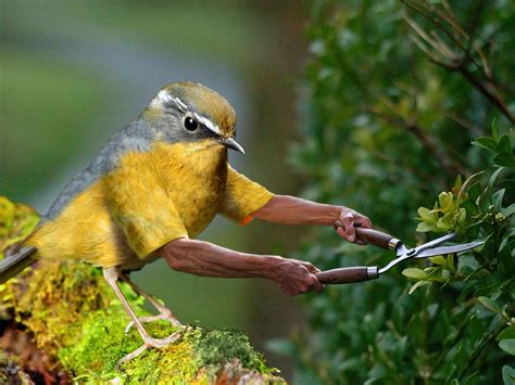 birds with arms subreddit top submissions business insider